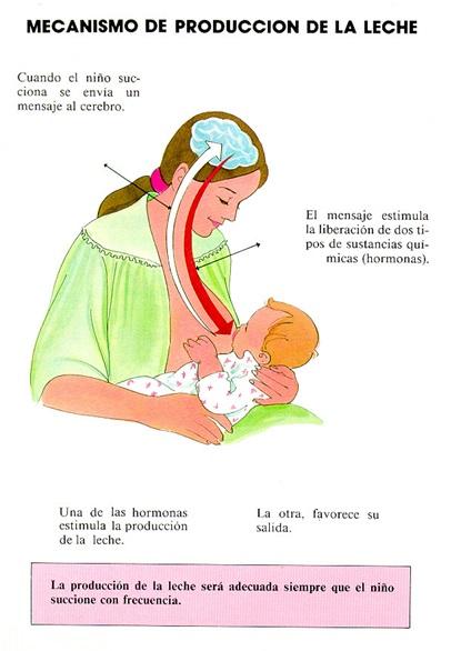 lactacion mamas adoptivas2